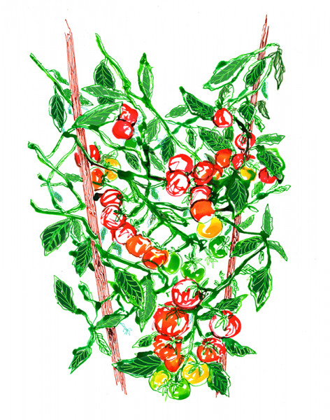 Maura O'Connor (Staff)- Tomatoes on the Vine $300